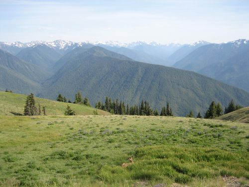 July 3rd on boat and Hurricane Ridge July 4, 2009 060