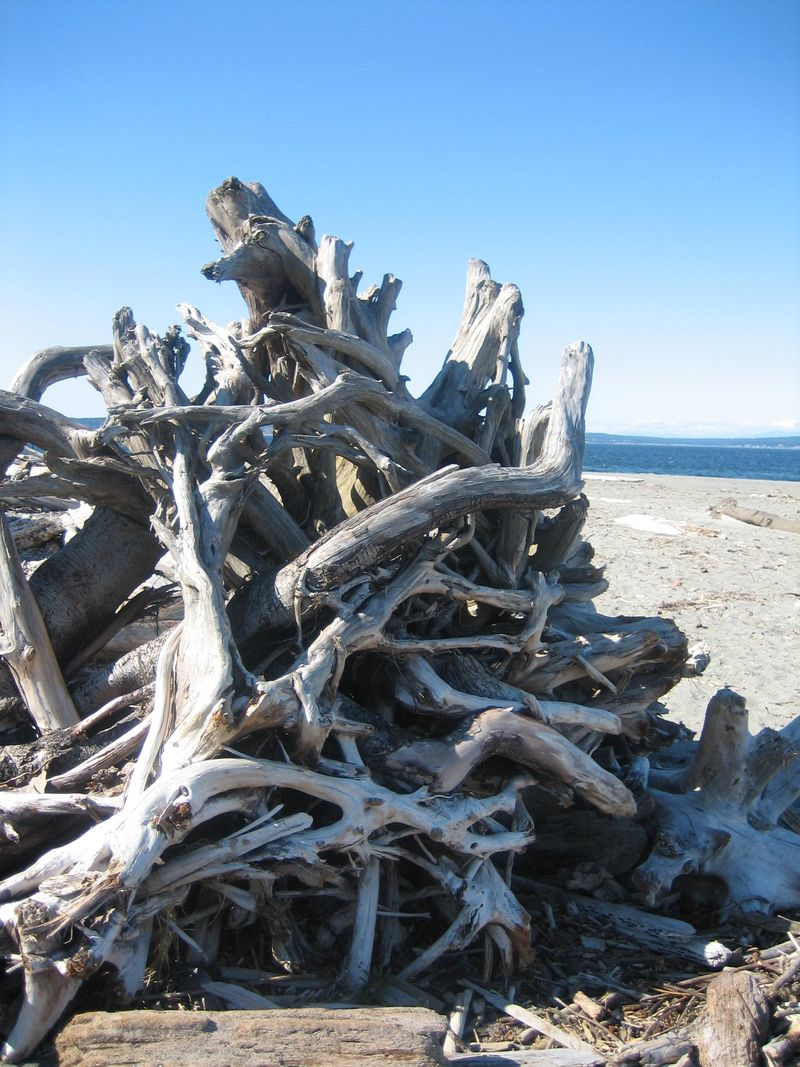 Interesting tangle of driftwood, Point No Point Lighthouse area, Hansville, WA 2006