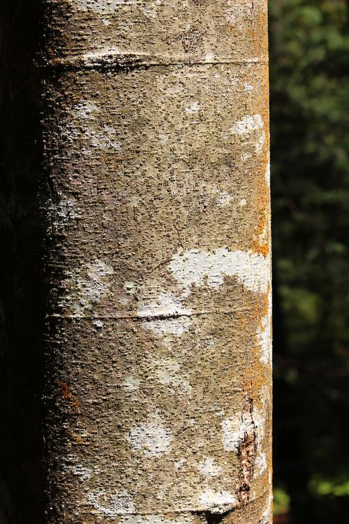 Blodel Reserve-1 048