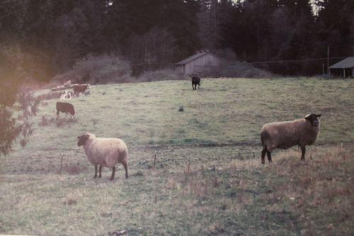 Blodel Reserve-1 297