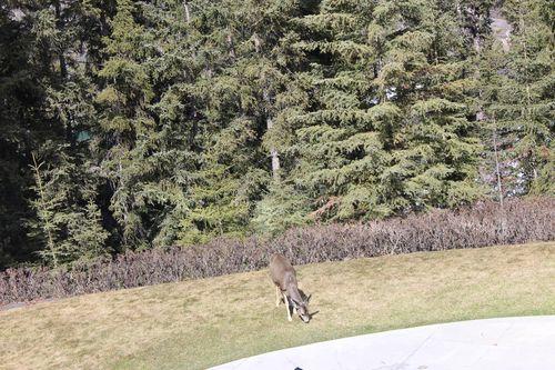 Banff Canada May 1, 2011 410