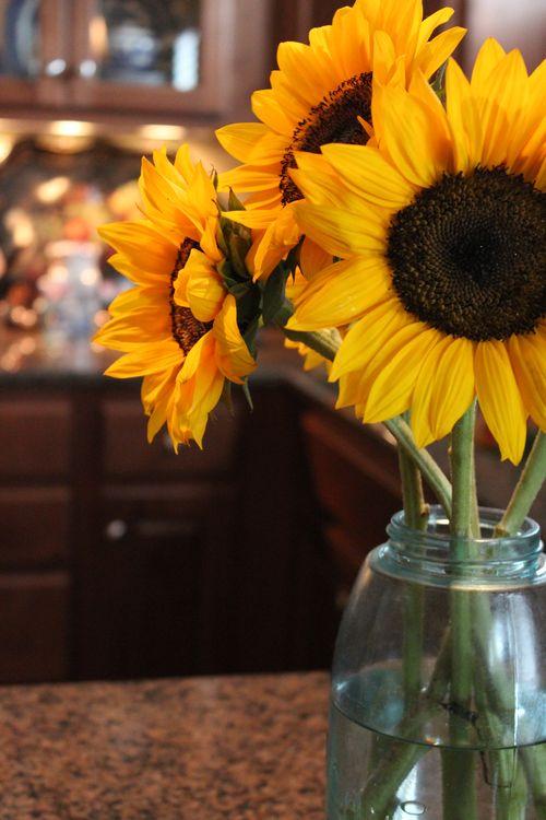 Sunflowers 015