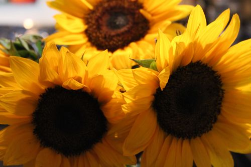 Sunflowers 026