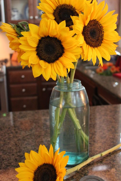 Sunflowers 041