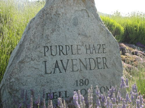 July 2010 House and Lavender Festival 057