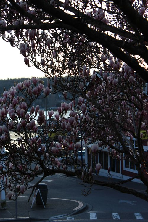 Downtown Poulsbo 2011 057