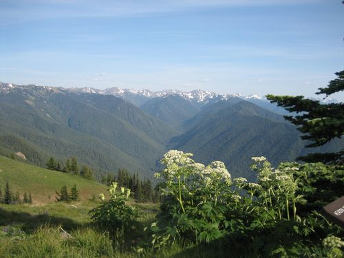 July 3rd on boat and Hurricane Ridge July 4, 2009 098