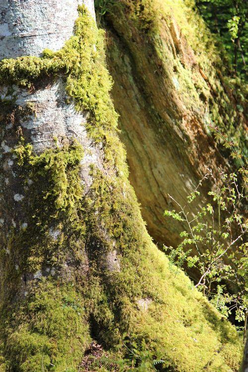 Blodel Reserve-1 036