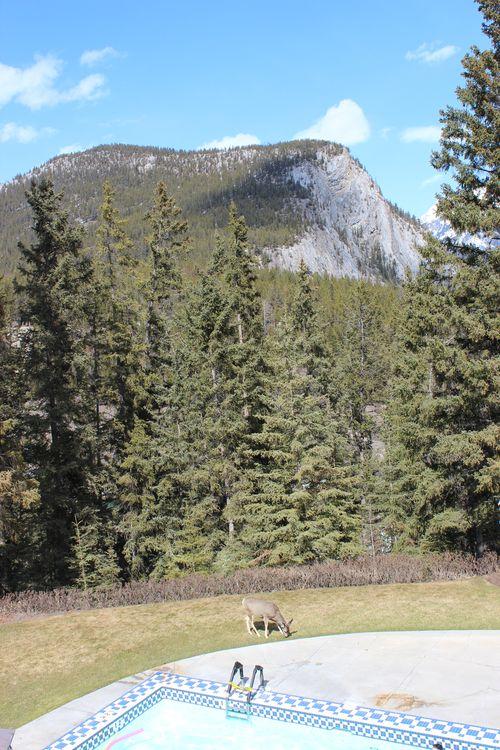 Banff Canada May 1, 2011 415