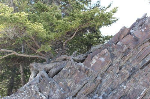 Banff Canada May 1, 2011 480