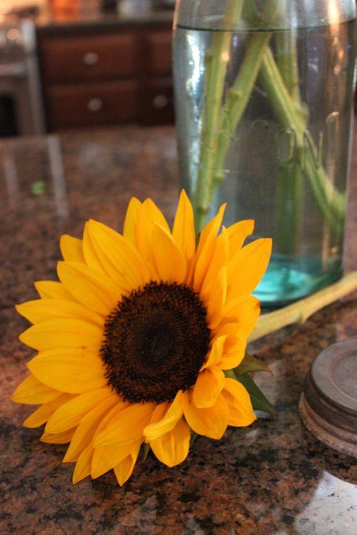 Sunflowers 035