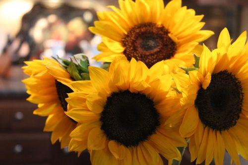 Sunflowers 030