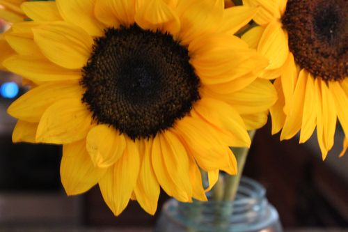Sunflowers 056