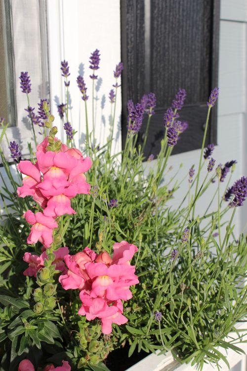 My Garden 046