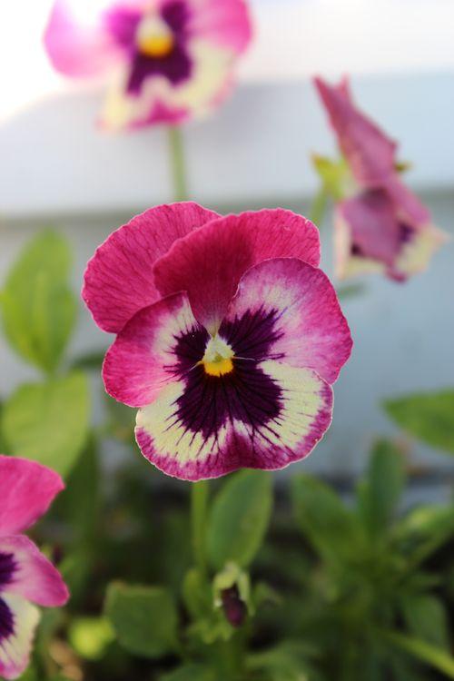 My Garden 058