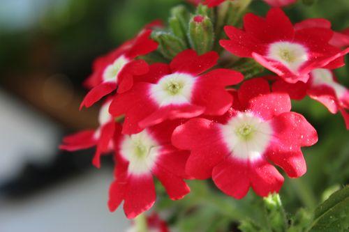 My Garden 073