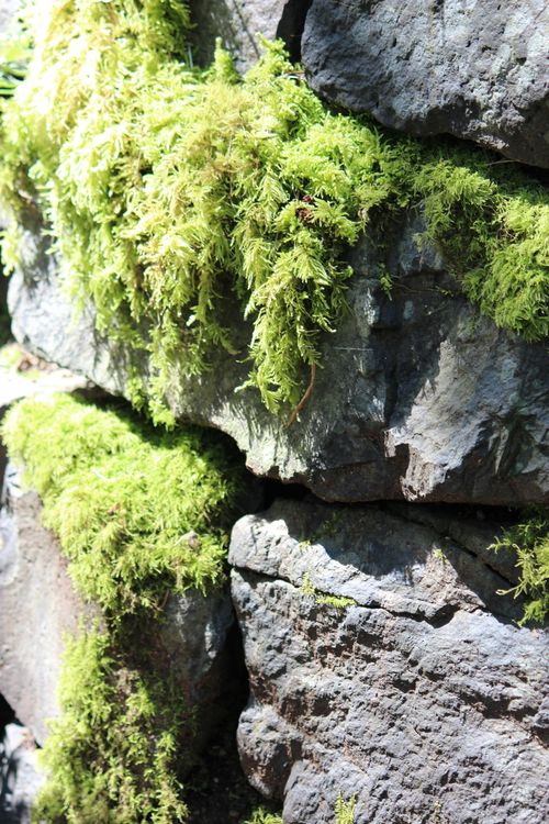 Blodel Reserve-1 043