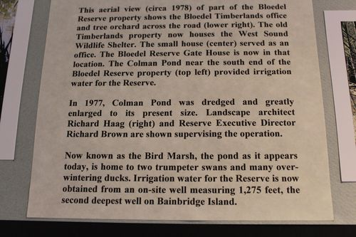 Blodel Reserve-1 298