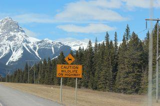 Banff Canada May 1, 2011 056