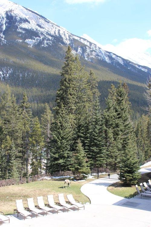 Banff Canada May 1, 2011 435