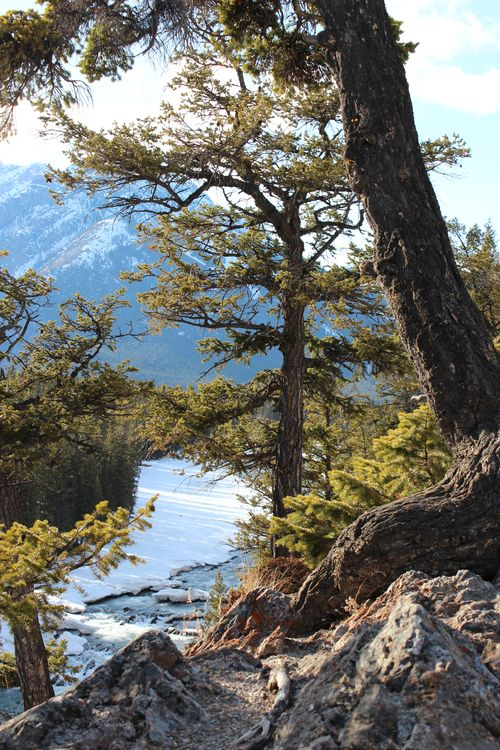 Banff Canada May 1, 2011 513