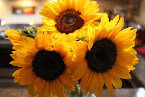 Sunflowers 027