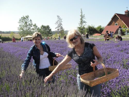 July 2010 House and Lavender Festival 051
