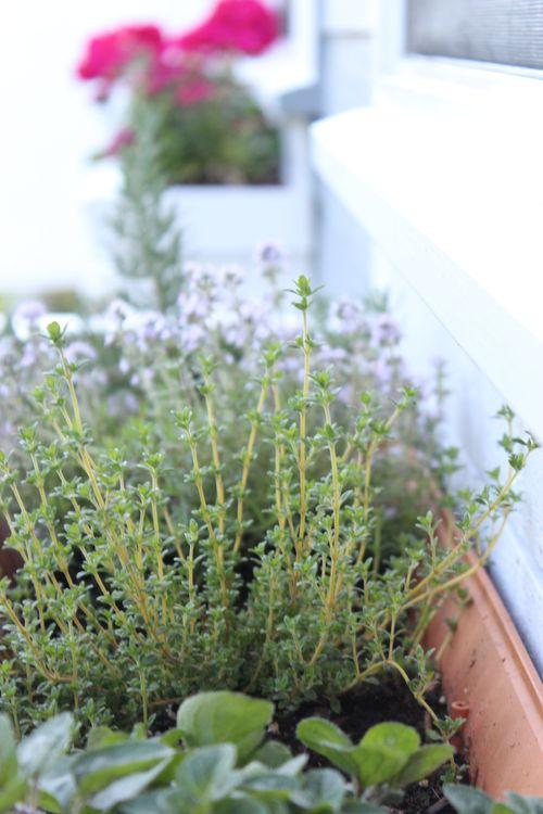 My Garden 024