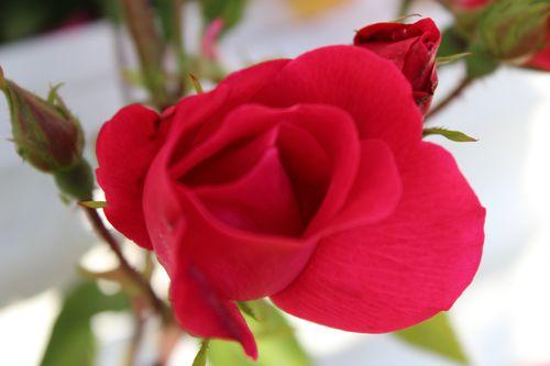 My Garden 043