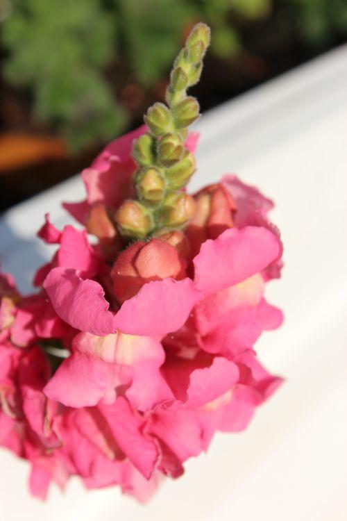 My Garden 041