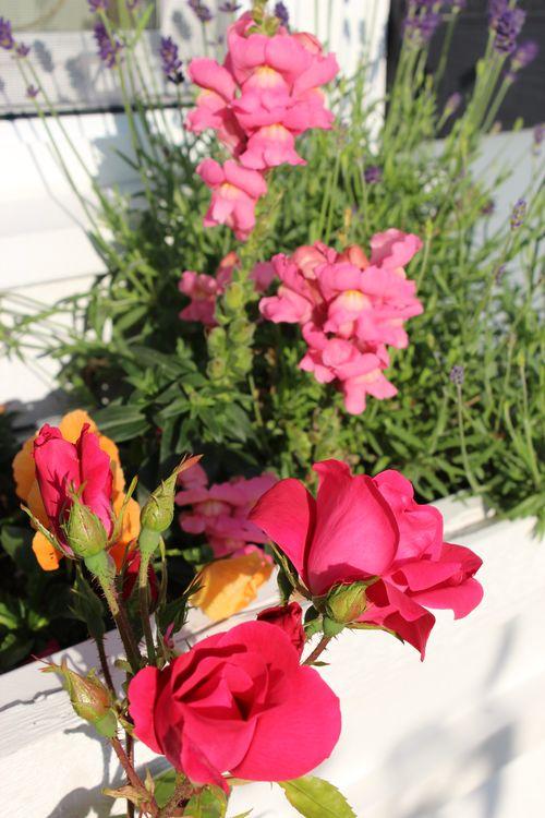 My Garden 051