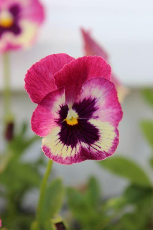 My Garden 054