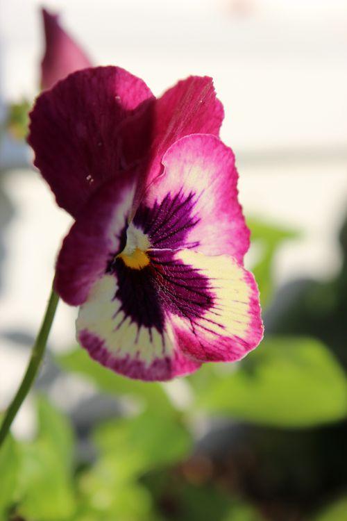 My Garden 055