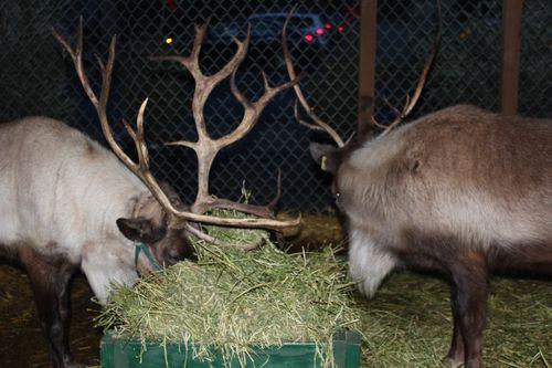 Christmas holiday decor 2011 256