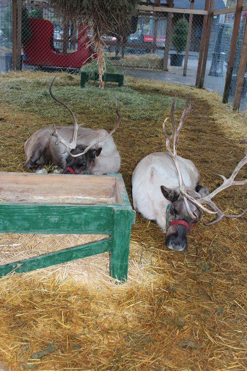 Christmas holiday decor 2011 185