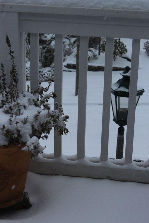 First snow of season Jan. 26, 2012 Poulsbo 014