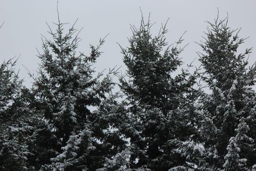 First snow of season Jan. 26, 2012 Poulsbo 076