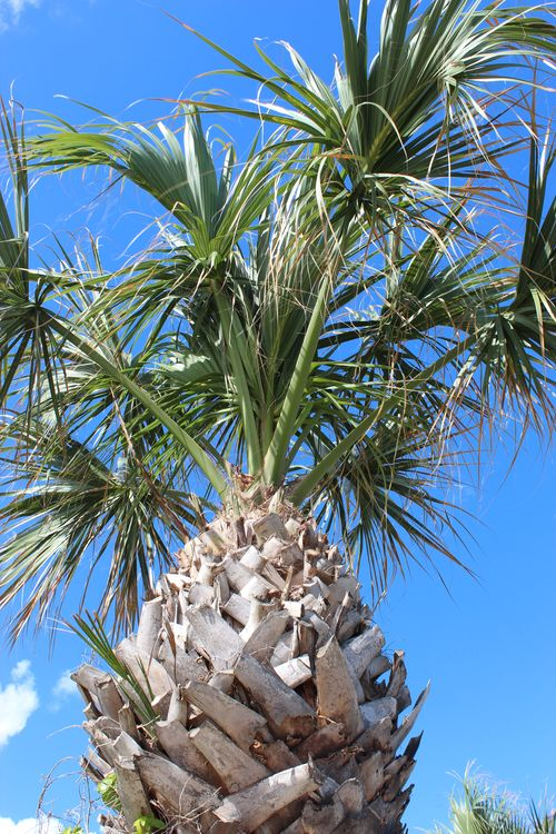 Cocoa Beach, Florida  April 2012 003