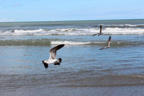 Cocoa Beach, Florida  April 2012 048