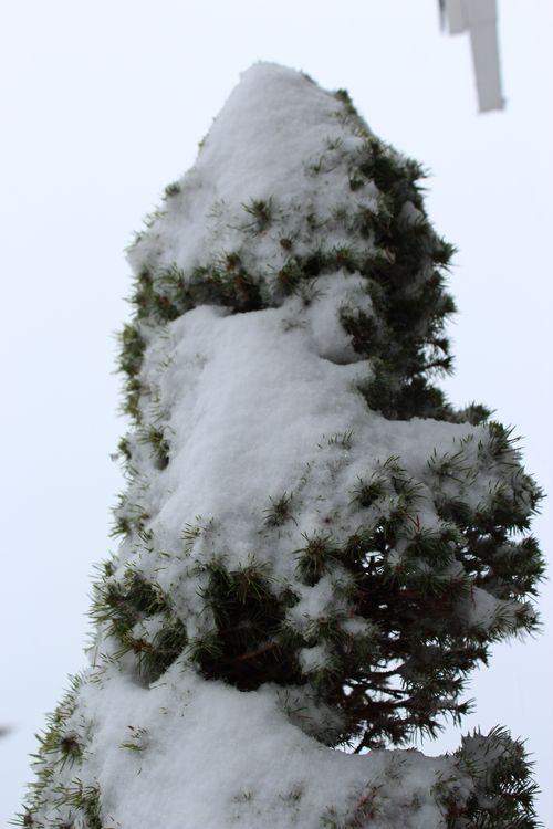 First snow of season Jan. 26, 2012 Poulsbo 064