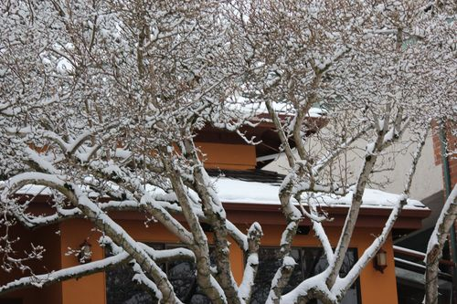 First snow of season Jan. 26, 2012 Poulsbo 048