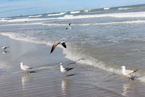 Cocoa Beach, Florida  April 2012 052