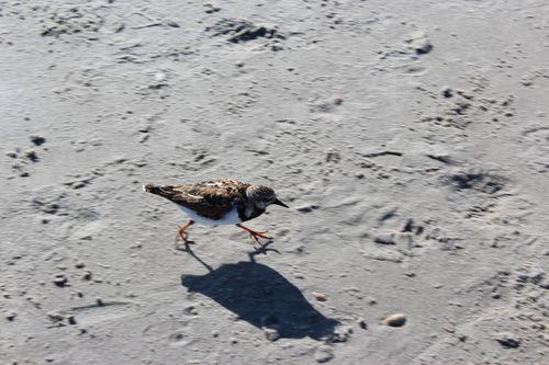 Cocoa Beach, Florida  April 2012 165