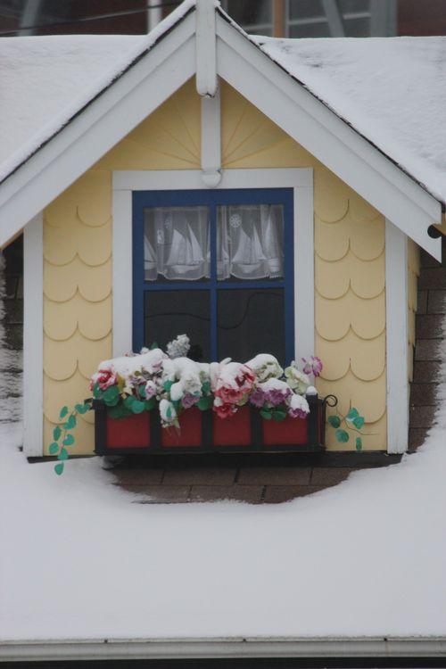 First snow of season Jan. 26, 2012 Poulsbo 029