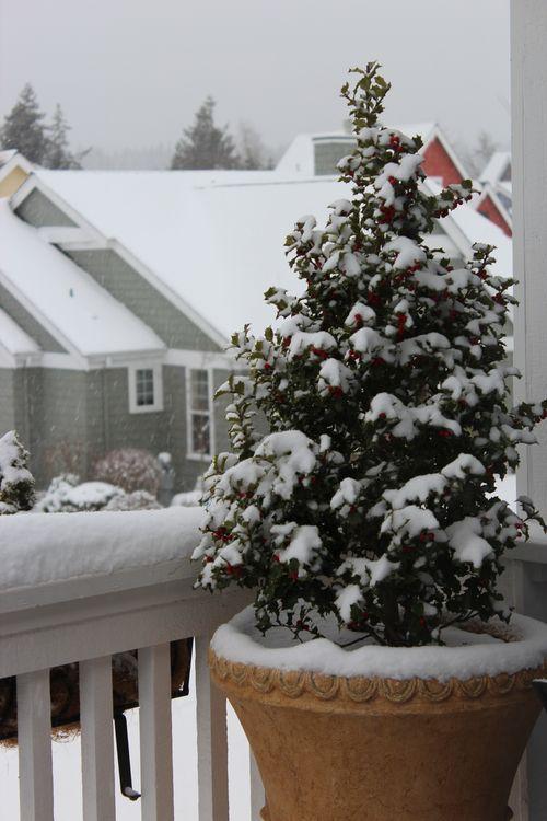 First snow of season Jan. 26, 2012 Poulsbo 127