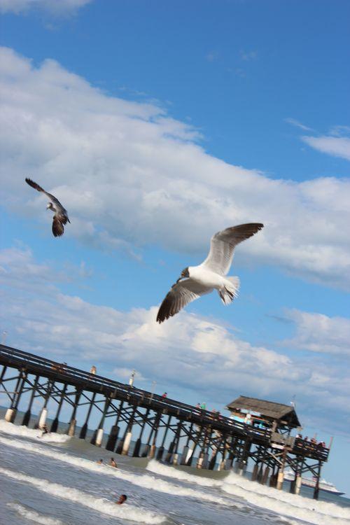Cocoa Beach, Florida  April 2012 167