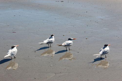 Cocoa Beach, Florida  April 2012 230