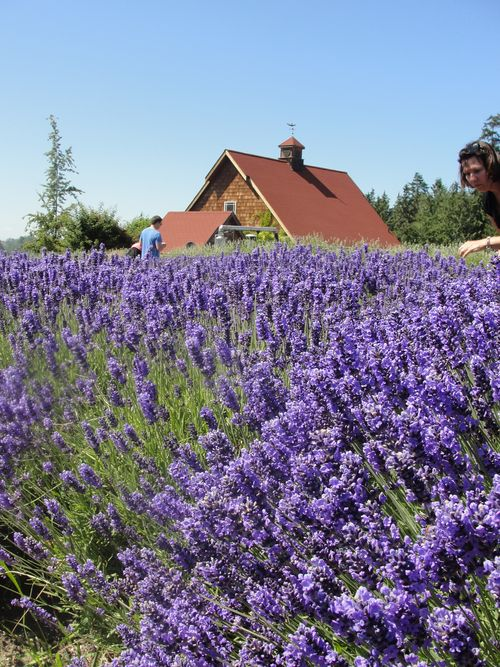 July 2010 House and Lavender Festival 031